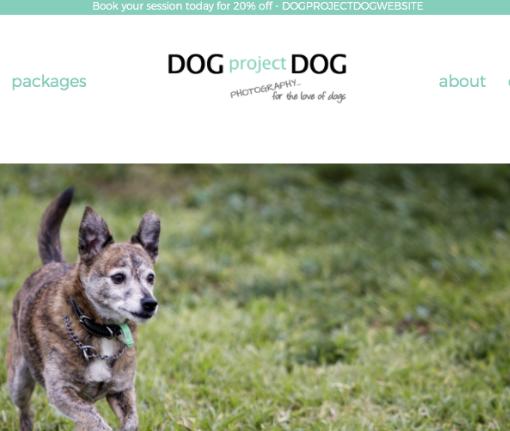 DogprojectDog