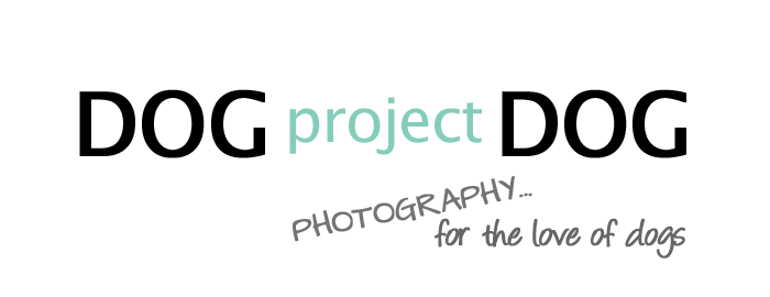 dogprojectdog logo